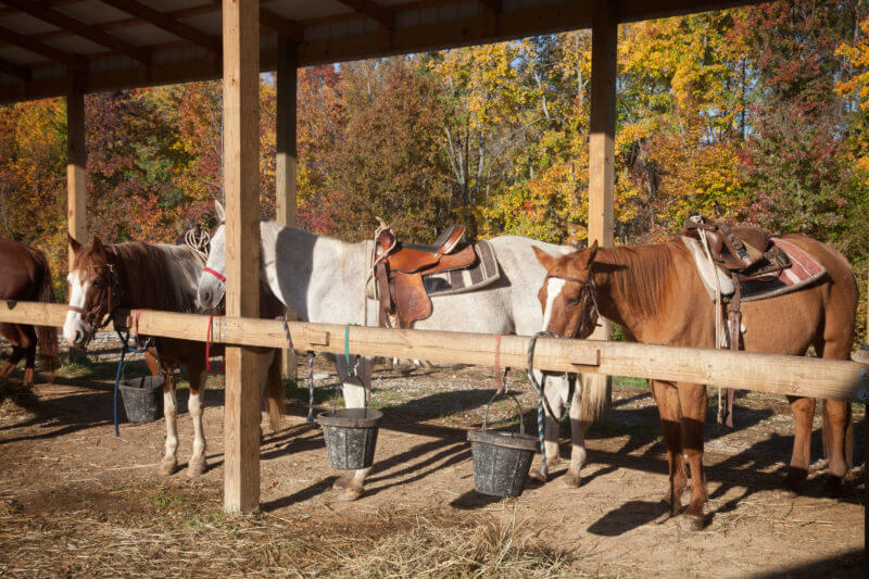 Santas-Stables-Horses-Lined-Up-Fall