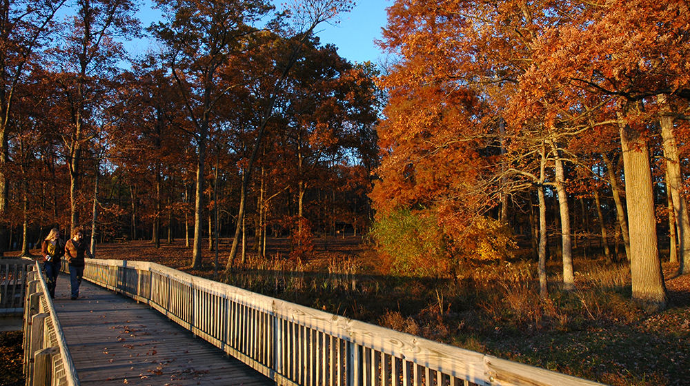 Lincoln State Park Bridge Fall Feature Photo 2019
