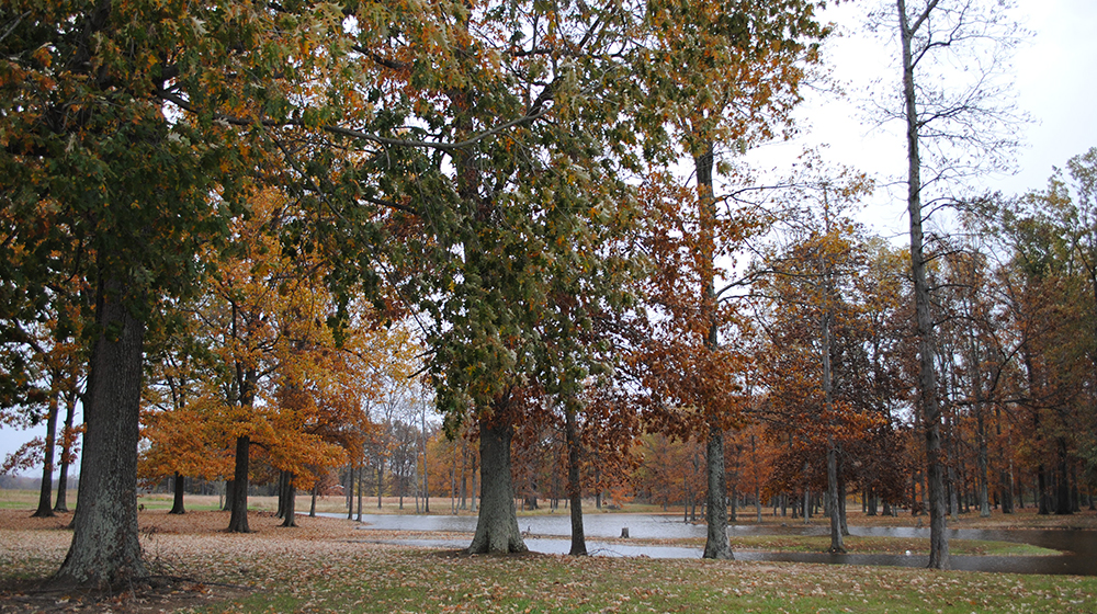 Oakridge Campground Fall Feature Photo website 2019